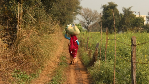 A farmer carries fodder on her back in Haryana.