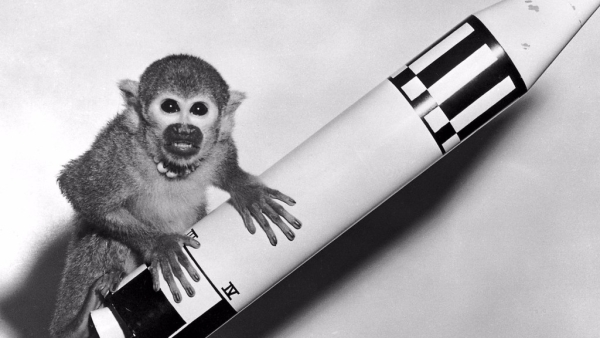 The two primates became the first of their kind to survive a space mission on 28 May 1959. (Photo Courtesy: Wikimedia Commons)