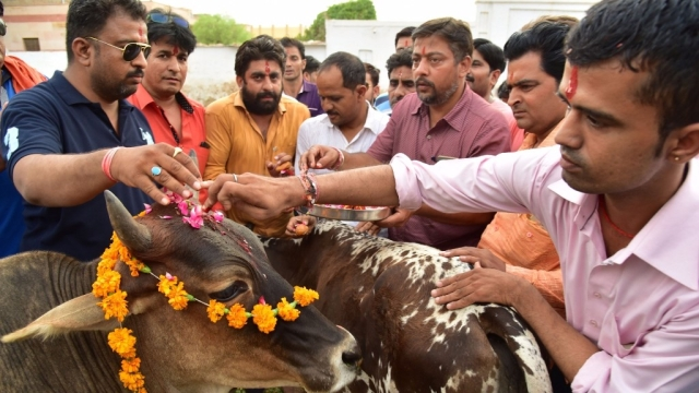 Right-wing Hindu activists worship cows in Bikaner on 31 May 2017. (Photo: IANS)