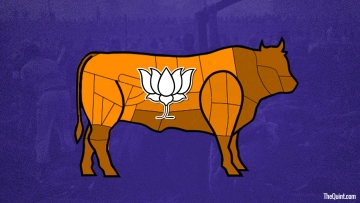 BJP is following Congress' footsteps in the Northeast with its cow politics. (Photo: Harsh Sahani/<b>The Quint</b>)