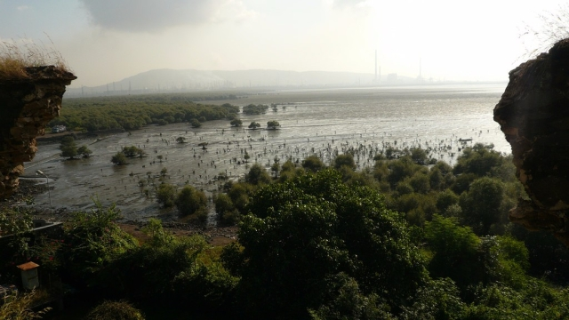 Mangroves in Mumbai.