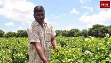 Odur Srinivasa Rao in his jasmine farm.
