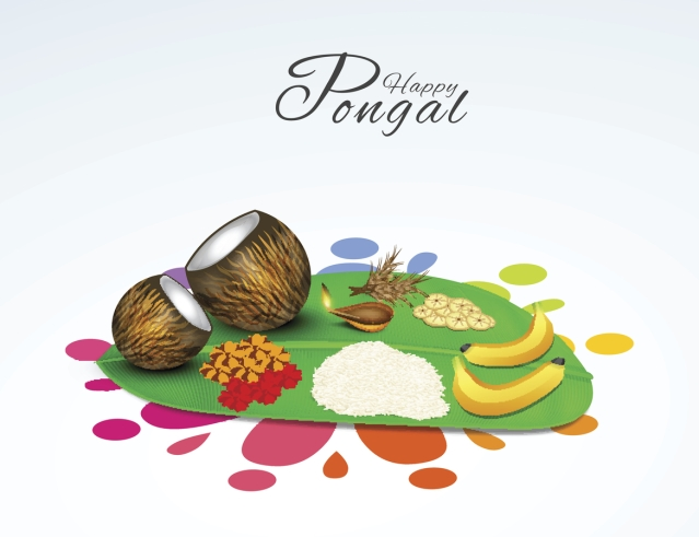 Pongal is also the name of a dish that is made on this festival.