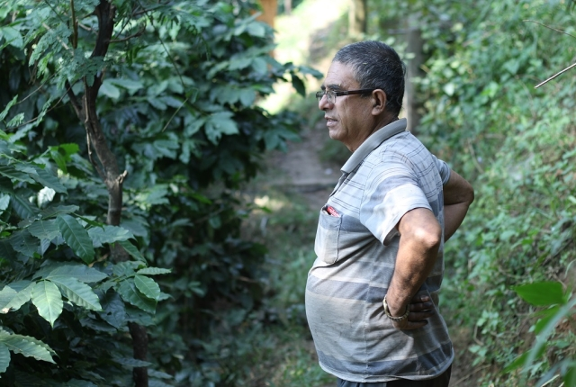 Ramesh Adhikari ponders the future of his coffee crop.