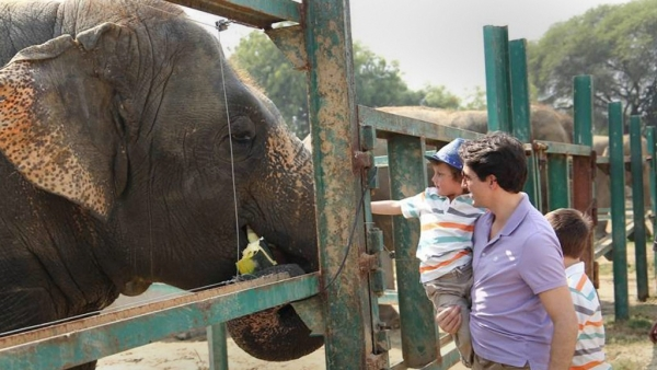 Trudeau and his sons feeding elephants at Wildlife SOS Elephant Conservation and Care Centre in Mathura.