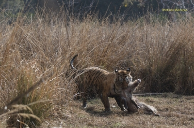 Machli holding a hunt by neck