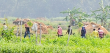 Uttar Gazipur: Armed men seen in fields of Uttar Gazipur during West Bengal Panchayat polls in South 24 Parganas on May 14, 2018. (Photo: IANS)