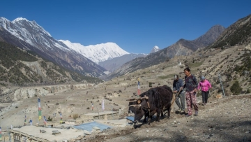 Farmer ploughing a field in Manang in 2018.