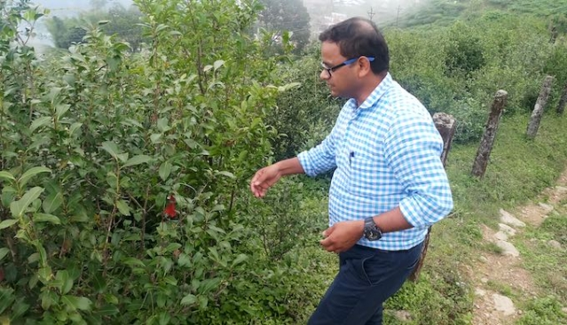 Tea scientist Mrityunjay Choubey is trying to find new ways to retain the original flavour of Darjeeling tea.