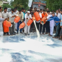 Swabhimani Shetkari Sanghatna activists drain milk onto the streets of Ahmednagar during the demonstration.