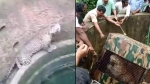 Leopard Chases Dog Right Into a Well – Villagers Rescue Them Both