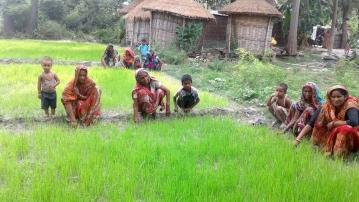 Women farmers at a paddy nursery in Muzaffarpur district