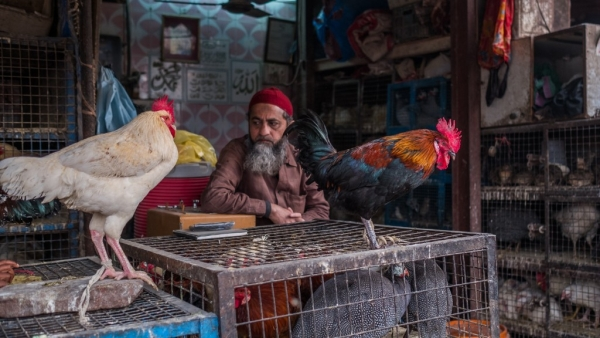 Indian has a booming poultry market.