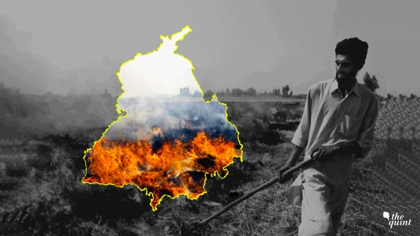 Playing With Fire: Why Punjab's Farmers Are Forced to Burn Stubble