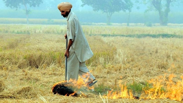 A farmer burns paddy crop residue in south east Punjab.
