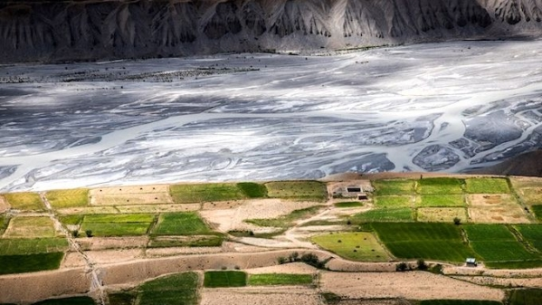 Pea fields along Spiti River near Rangrik village in Himachal Pradesh.