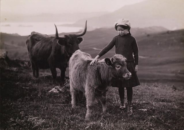A girl pets a calf in Scotland, 1918.