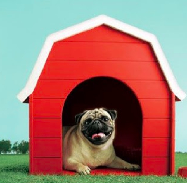 Cheeka, the Vodafone pug!