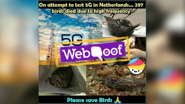 The viral post is false, and the two incidents – 5G radiation and the birds' deaths – are unrelated.