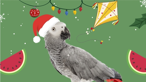 Alexa Turned Santa For This Parrot but a 'Hooman' Gift-Blocked it