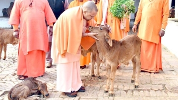 Yogi has asked that stray animals, including cattle, be sent to shelters by 10 January.