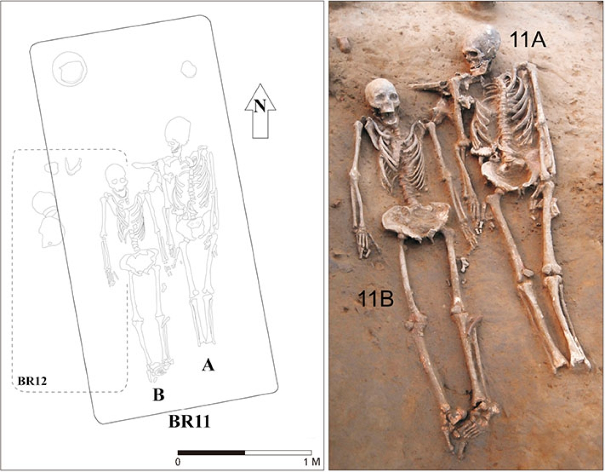 The two skeletons. Their heads were placed towards north. The foot bones on one of the skeletons was missing.