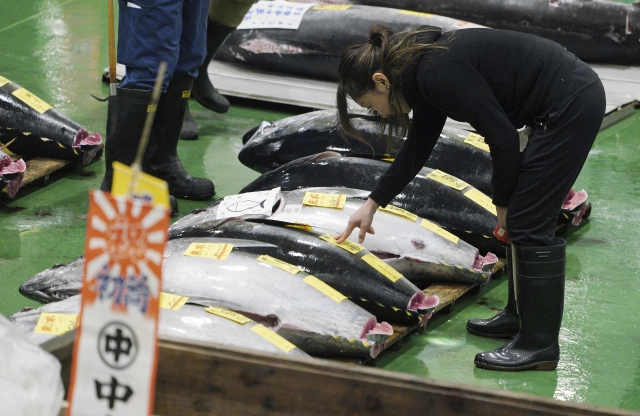 A prospective buyer inspects the quality of a fresh tuna before the first auction of the year at the newly-opened Toyosu Market.