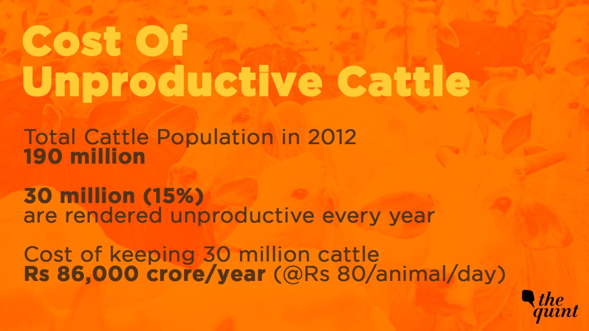 Cost of keeping unproductive cattle
