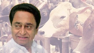 The Madhya Pradesh government will set up 1,000 'gaushalas' or cow shelters in the state in the next four months.