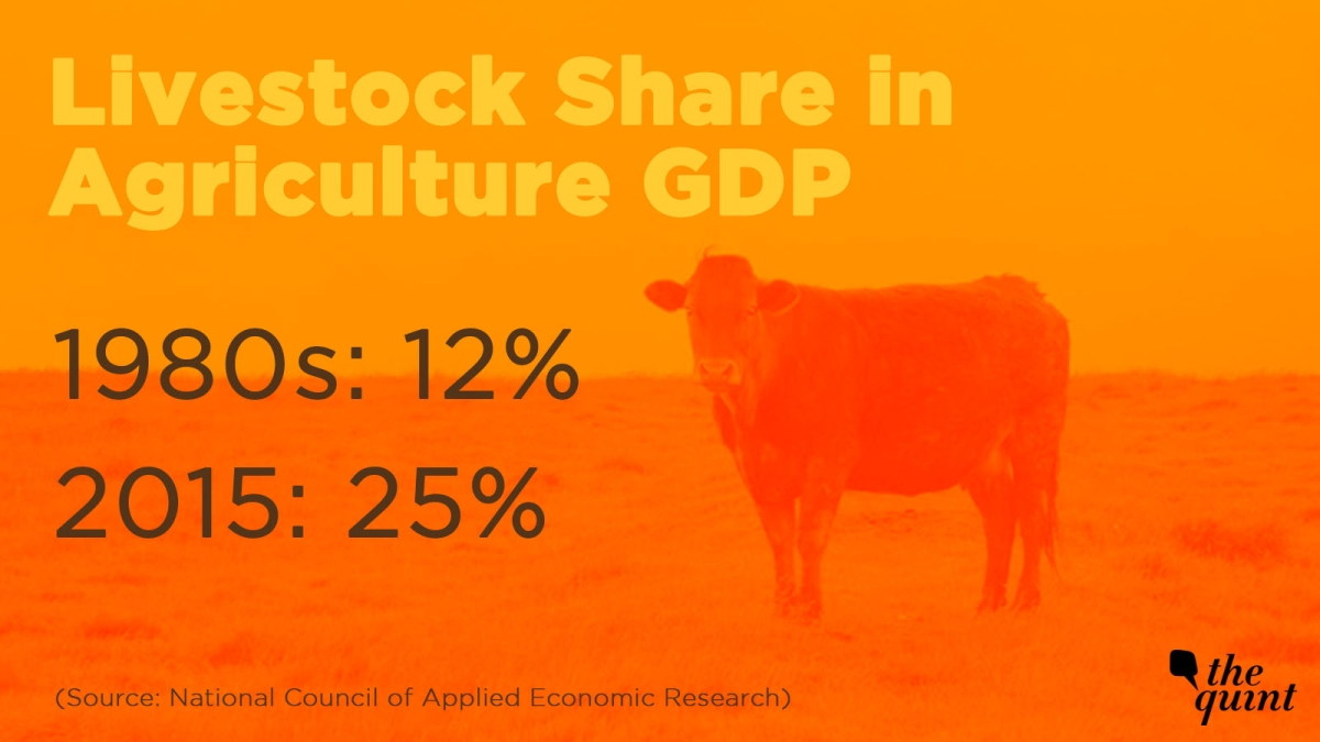 Share of livestock in Agriculture GDP