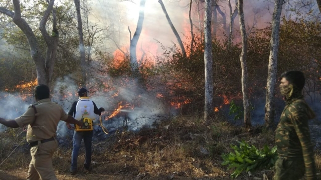 Volunteers and forest officers attempt to douse the flames at Bandipur Tiger Reserve.