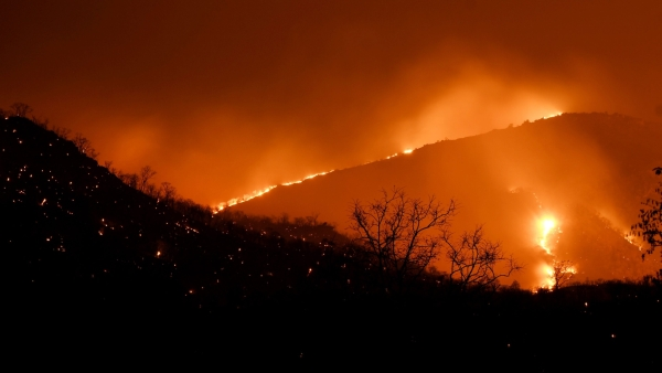 According to official estimates, 500 hectares of forests have been engulfed in high intensity fires.