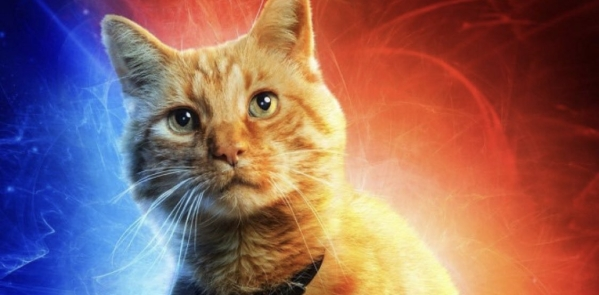 Meet Goose the Cat, Captain Marvel's most popular character.