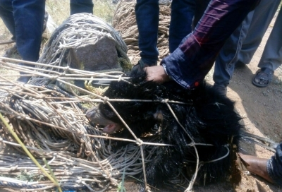 Two bear cubs rescued from well in Telangana