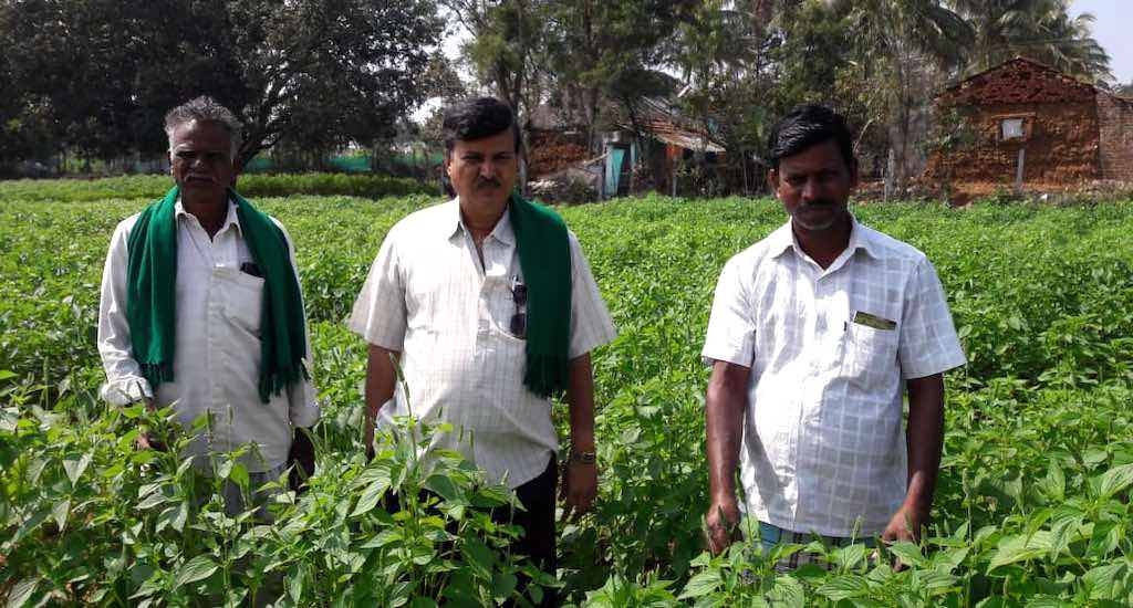 #GoodNews: Chia Seeds Earn Bumper Incomes for Mysuru Farmers
