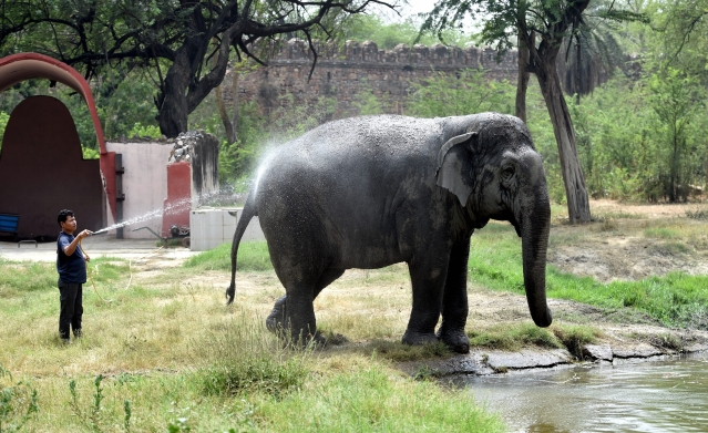 A Delhi Zoo worker sprays water on an elephant in an attempt to cool it off. During the harsh Delhi summer, the mercury often breaches the 45 degree Celsius mark, making it unbearable for many, including animals.