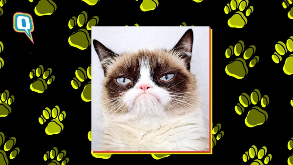 RIP Grumpy Cat: You Meme The World To Us