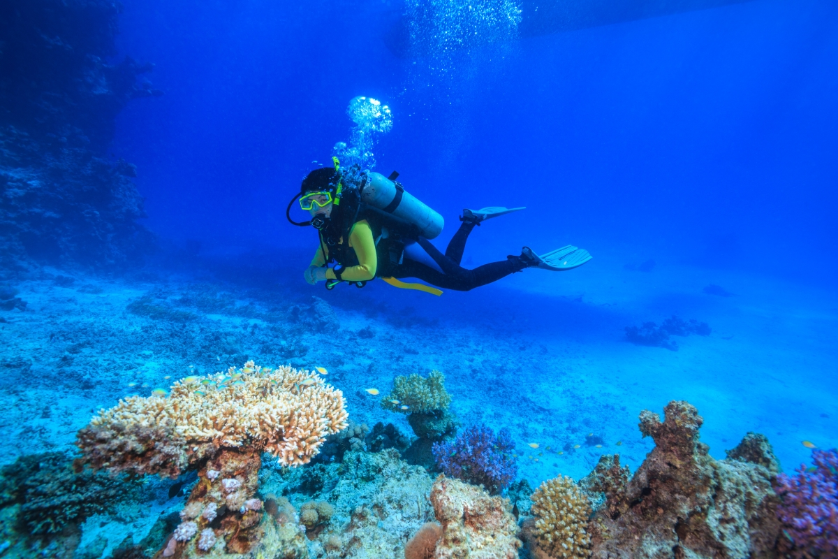 How about scuba diving this summer?