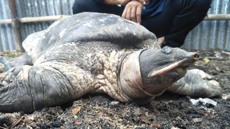 #GoodNews: Assam Temple Helps Bring Back Extinct Turtle Species