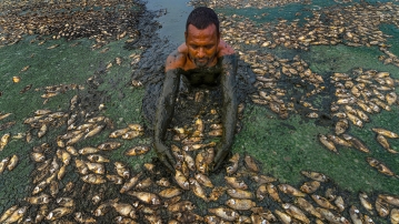 Fish that are believed to have died in the drying Lake Thiruneermalai due to lack of rainfall.