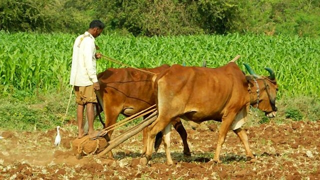 Does 'Zero-Budget Natural Farming' Actually Work? A Reality Check