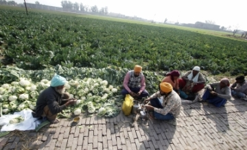 Amritsar: Farmers have their lunch besides a cauliflower field in Amritsar on Feb 1, 2018. In the Union Budget 2018-19, Finance Minister Arun Jaitley