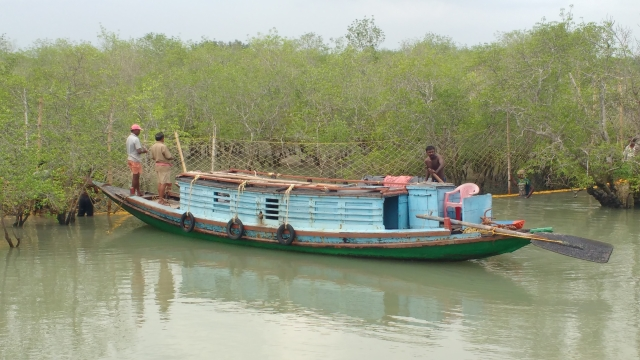 Honey collectors hunt searching for honeycombs in Sunderbans, West Bengal