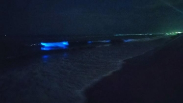 The 'magical glow' is caused by a high concentration of a micro-plankton called Noctiluca scintillans in the sea.