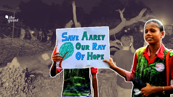 64% Trees Relocated to Aarey Dead: Why Did Transplantation Fail?