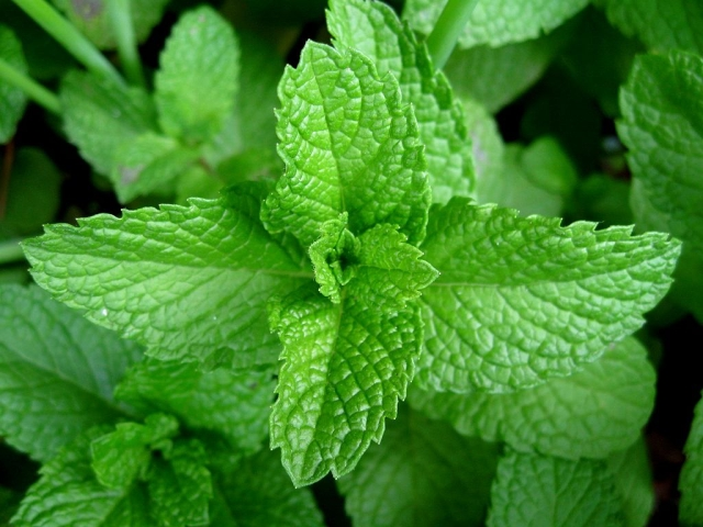 Have cooling foods like mint to cool your system.