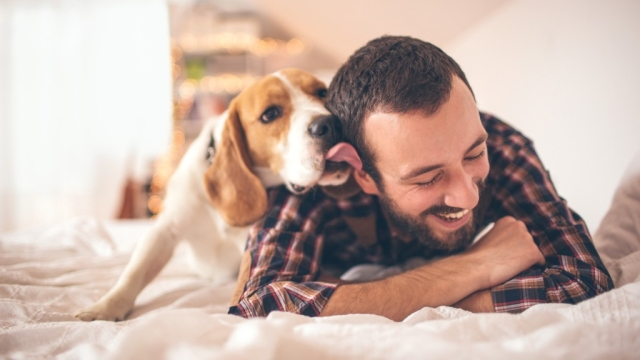 Studies have shown that spending time with pets releases  dopamine and endorphins which are responsible for a feeling of happiness and well-being.