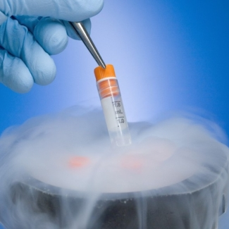 Here's a low-down on the latest buzzword in town – stem cell therapy.