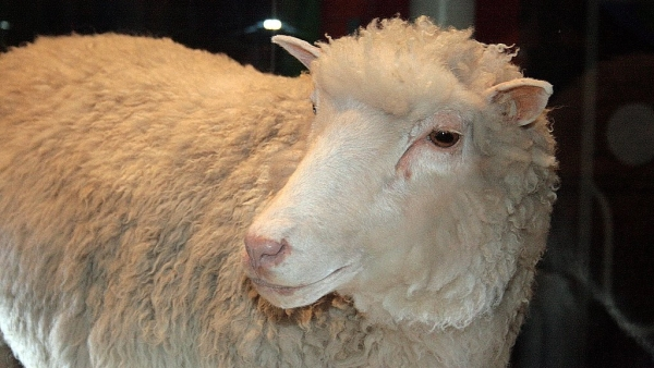 Here're some interesting facts about Dolly the Sheep.