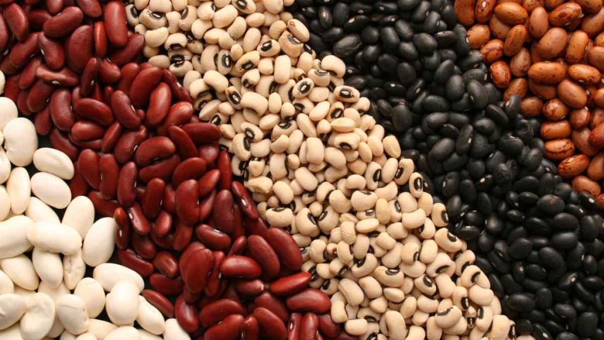 बीन्स प्रोटीन का एक उत्कृष्ट और सस्ता स्रोत है।